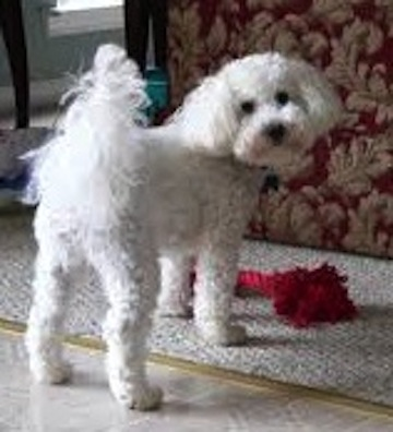 Lost Dog Eastern Passage 24 Cow Bay Rd Dartmouth