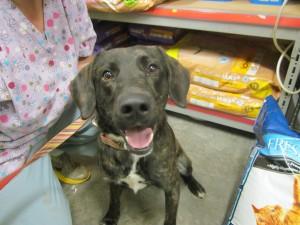 unknown-found-dog-nov-20-2012