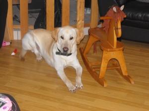 2012-deer-pics-406