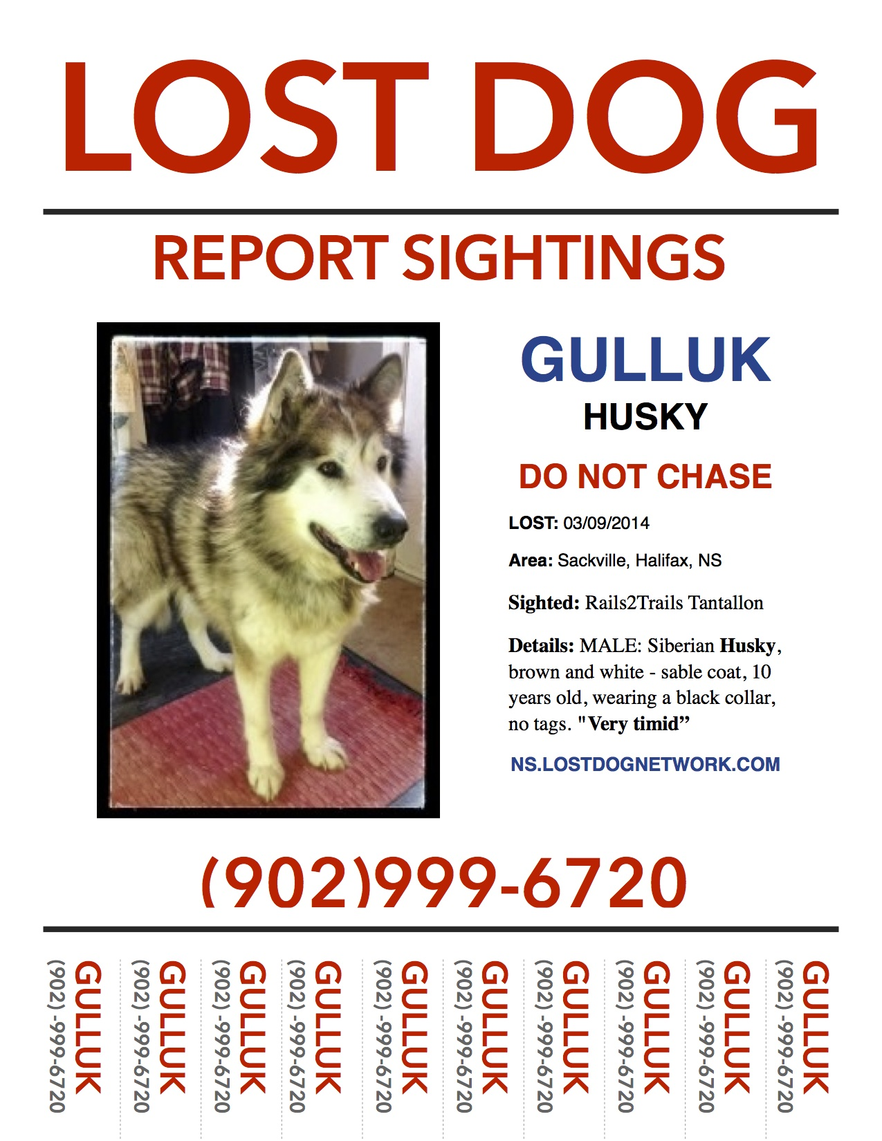 LOST DOG POSTER: Sackville, Halifax Co., NS U2013 Husky, Male, 10 Yrs U2013 U201cGulluku201d  Lost Pet Poster