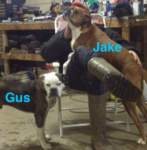 LOSTGus:JakeValleyBulldog:BoxerMalesAdultsTennycapeHants4:22:14