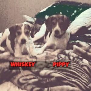 WhiskeyPippy