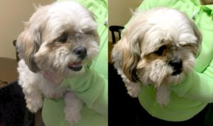 SHIH-TZU-NEW-WATERFORD