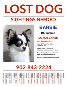 LOSTFlyerBarbieLonghairedChihuahuaFemale4yrsValleyColchester8:21:16
