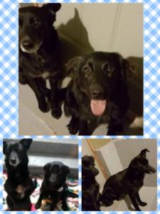 HAPPY ENDING: Home, Safe n' Sound: Found: Roaming Dogs